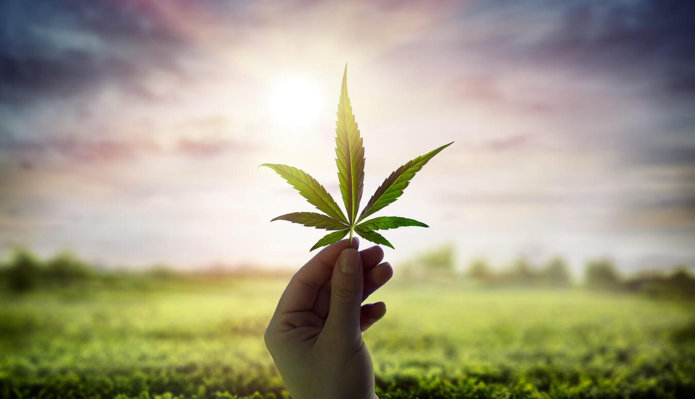 What is The Difference Between Marijuana & Hemp?